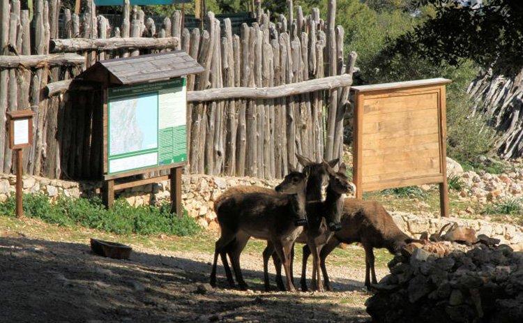 cervo.sardo-ogliastra