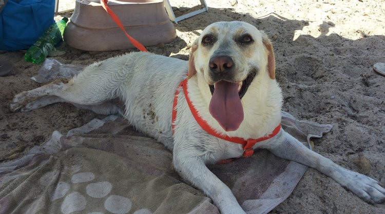 dog-beach-muravera