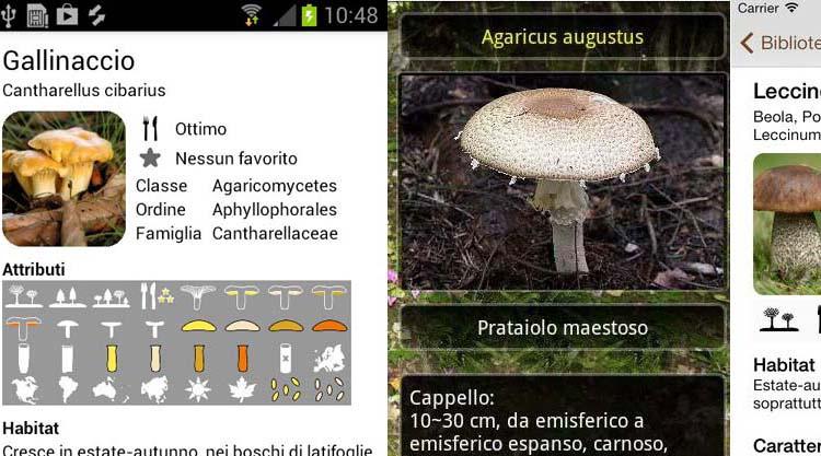 app-funghi-italia