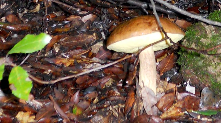 funghi-sardegna
