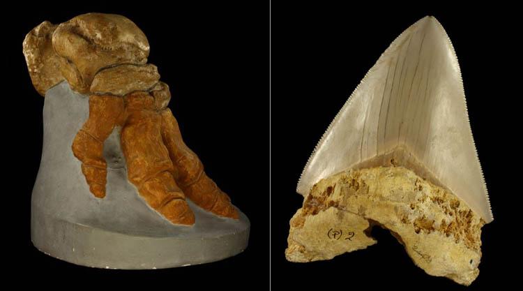 mammuth-squalo-sardegna