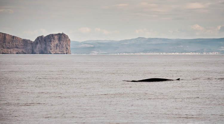 balene-capo-caccia-alghero