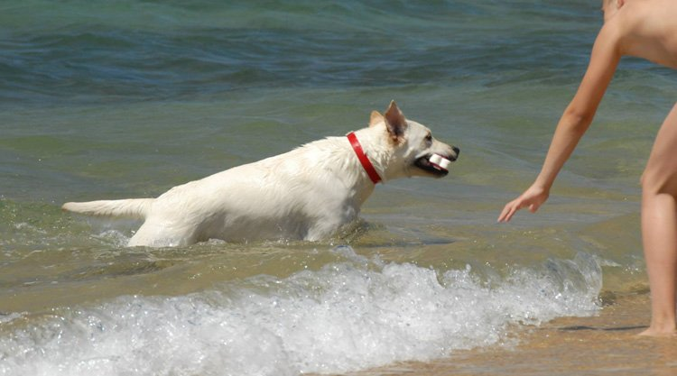 spiagge-cani-sardegna